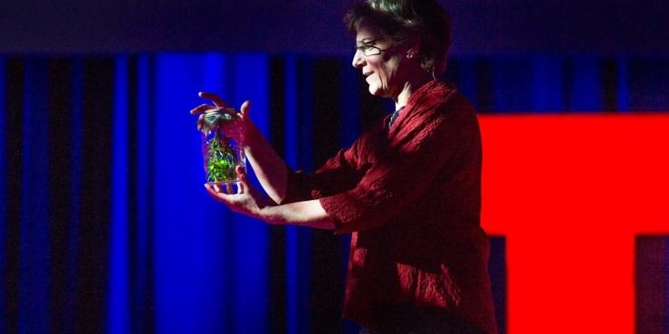 Sara Lewis (fireflies program)